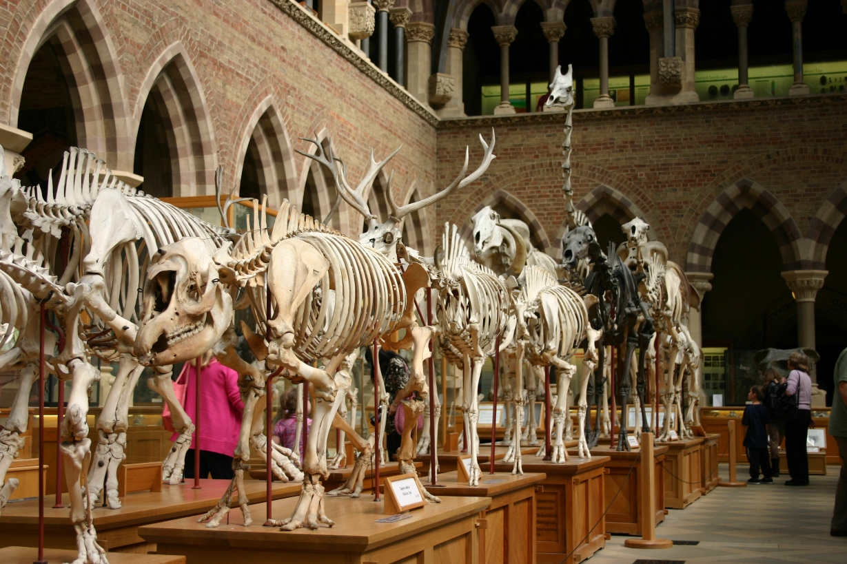 Oxford Natural History Museum Opening Hours