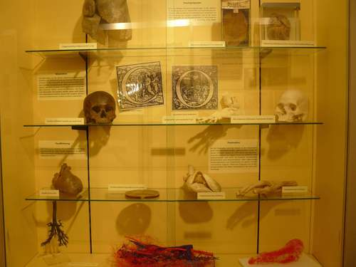 Anatomical%20models.jpg