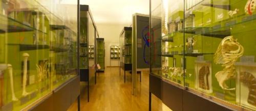 anatomisches%20museum%20basel.jpg