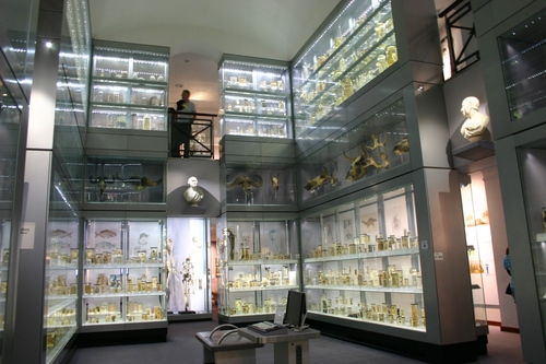 Hunterian%20Museum%2C%20Royal%20College%20of%20Surgeons%2C%20London%20-%2002.JPG