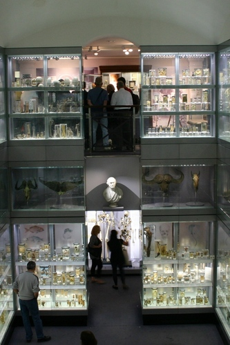 Hunterian%20Museum%2C%20Royal%20College%20of%20Surgeons%2C%20London%20-%2003.JPG