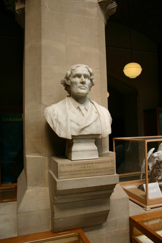 John%20Scott%20Burdon-Sanderson%27s%20bust%2C%20Oxford%20University%20Museum%20of%20Natural%20History%2C%20Oxford.JPG