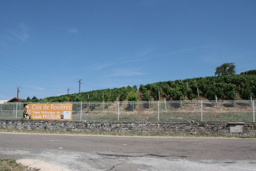 Louis%20Pasteur%20historic%20vineyard%2C%20Montigny-les-Arsures%20-%2001.JPG