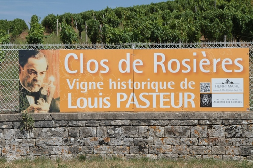Louis%20Pasteur%20historic%20vineyard%2C%20Montigny-les-Arsures%20-%2003.JPG
