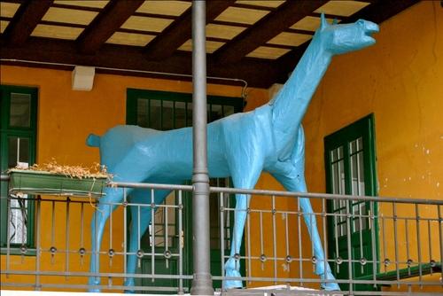 cavallo%205.JPG