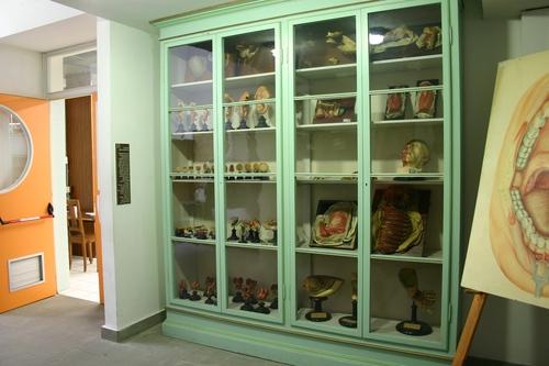 Museo%20Anatomico%2C%20Siena%2C%20Italy%20-%2003.JPG