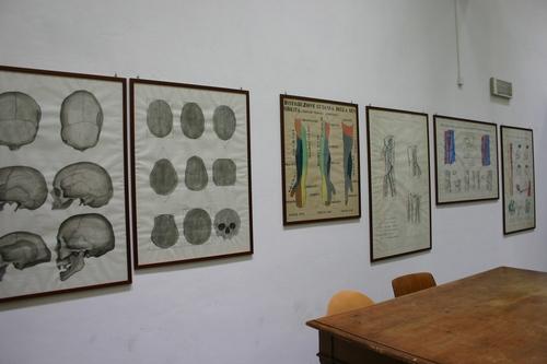 Museo%20Anatomico%2C%20Siena%2C%20Italy%20-%2004.JPG