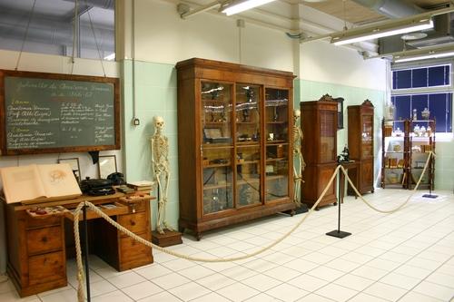 Museo%20Anatomico%2C%20Siena%2C%20Italy%20-%2006.JPG