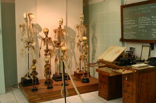 Museo%20Anatomico%2C%20Siena%2C%20Italy%20-%2007.JPG