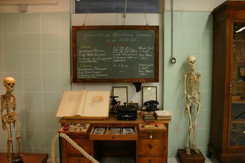 Museo%20Anatomico%2C%20Siena%2C%20Italy%20-%2008.JPG