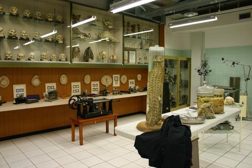 Museo%20Anatomico%2C%20Siena%2C%20Italy%20-%2010.JPG