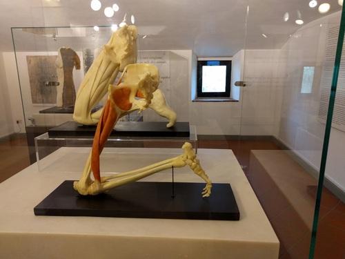 Museo%20Leonardiano%20in%20Vinci%20%282%29.jpg
