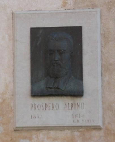 Prospero%20Alpini%27s%20tablet%20-%2004.JPG