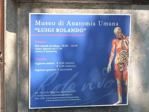 Human%20Anatomy%20Museum%20Luigi%20Rolando%2C%20Turin%2C%20Itlay.JPG