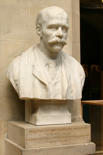 Walter%20Frank%20Raphael%20Weldon%27s%20bust%2C%20Oxford%20University%20Museum%20of%20Natural%20History%2C%20Oxford%20-%2002.JPG